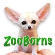Zooborns logo